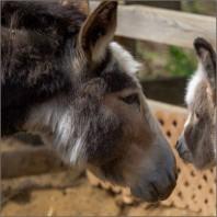 Sorties familiales: on visite les ânes! [LAPRESSE]
